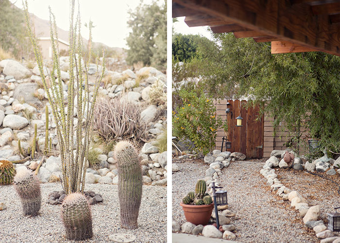 Jaimi-cactus