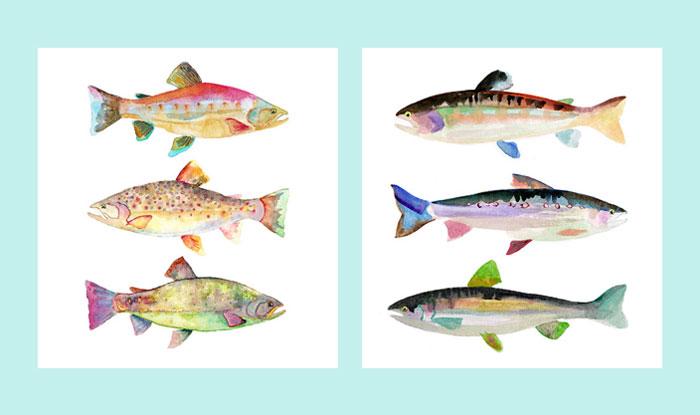 fish-700