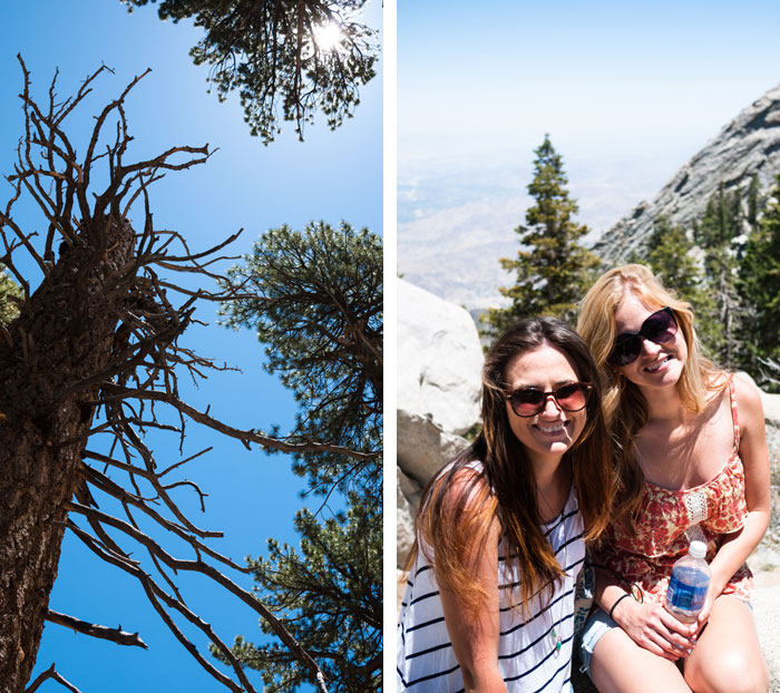 Palm-Springs-Tramway-Trees-Hiking